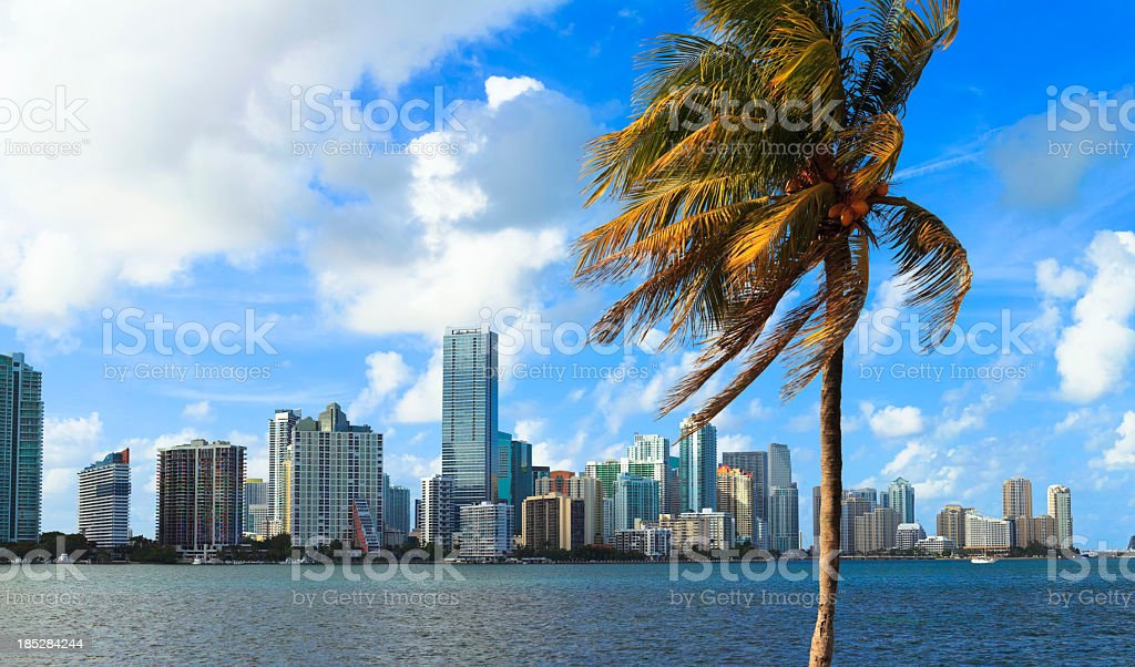 Miami skyline with palm tree in foreground royalty-free stock photo