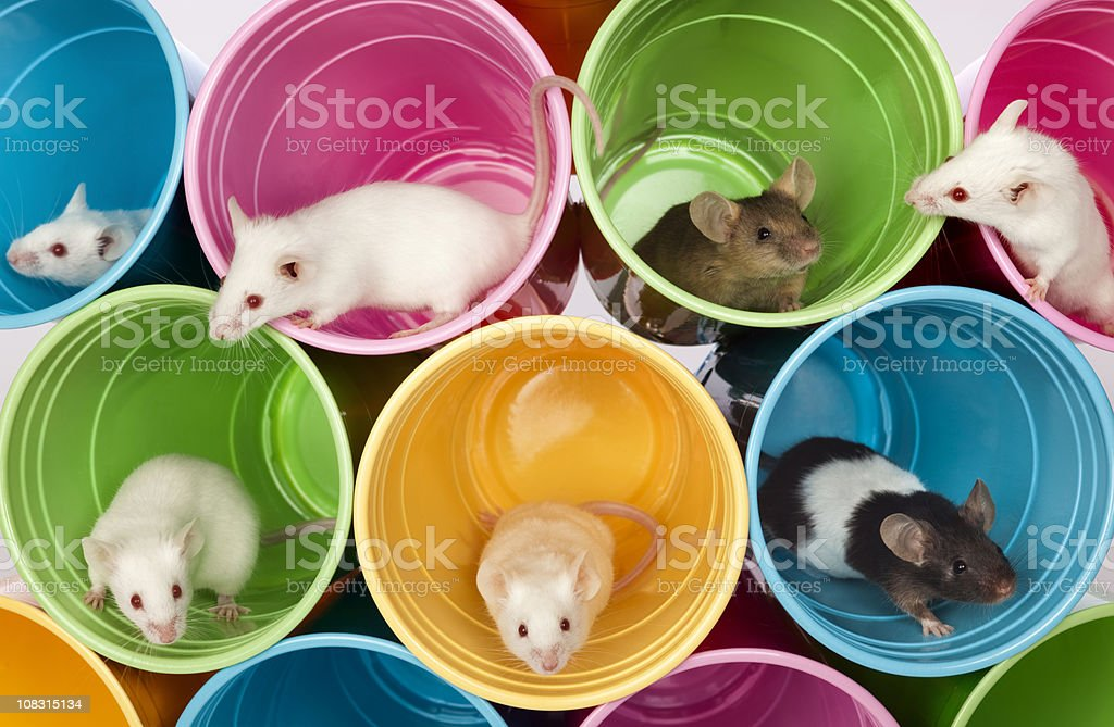 Mice Living In Colorful Mouse Apartments, Condos of Plastic Cups royalty-free stock photo