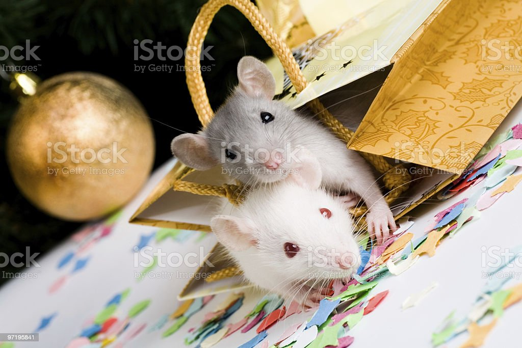 Mice royalty-free stock photo