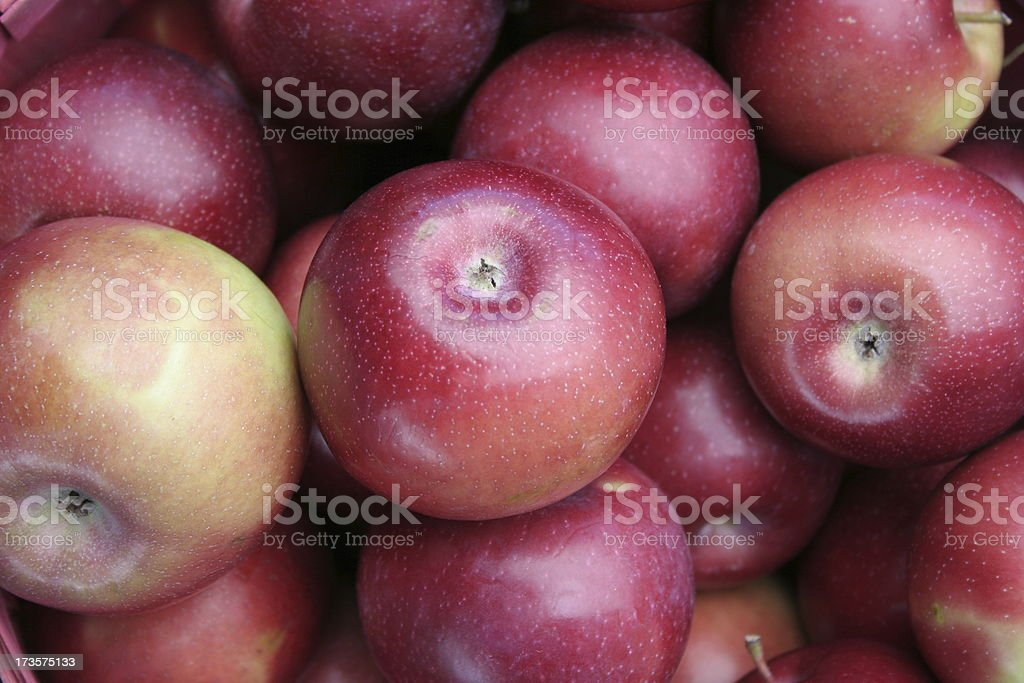 Michigan Apples stock photo