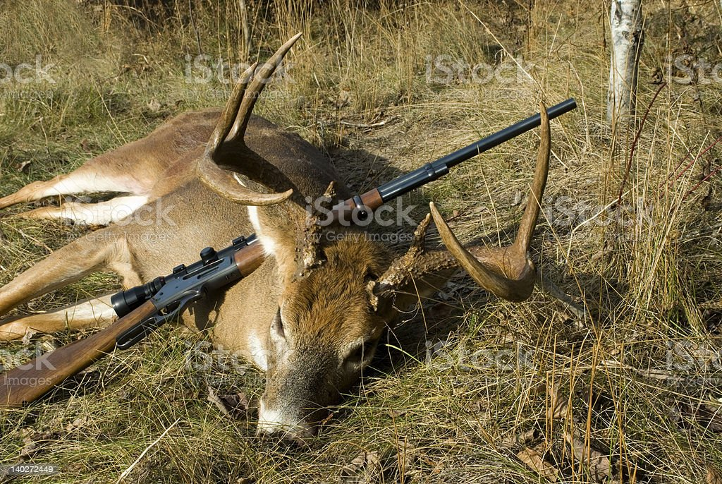 Michigan Whitetail Deer stock photo
