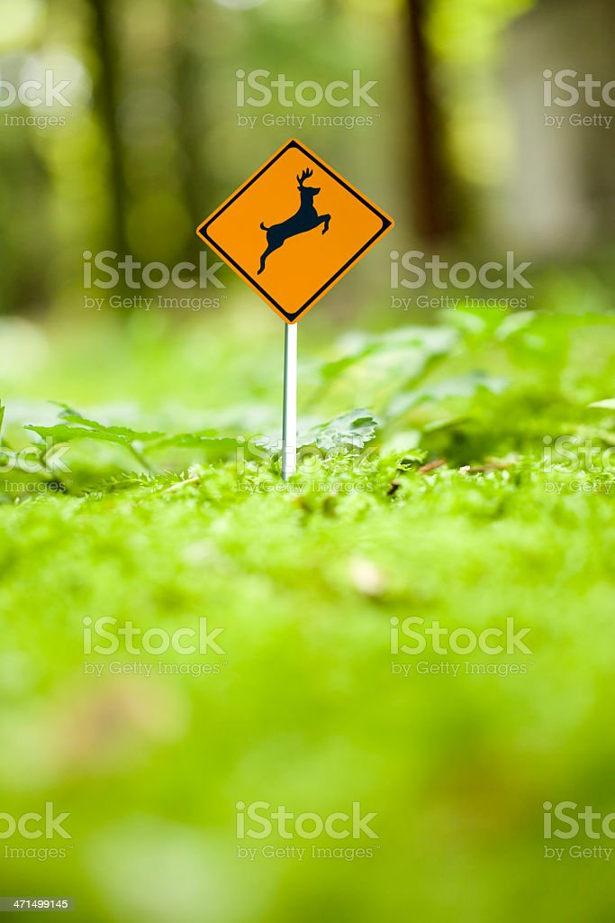 Micro deer caution sign in green forest stock photo