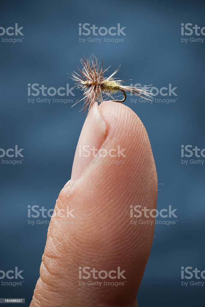 Micro Dry Fly royalty-free stock photo