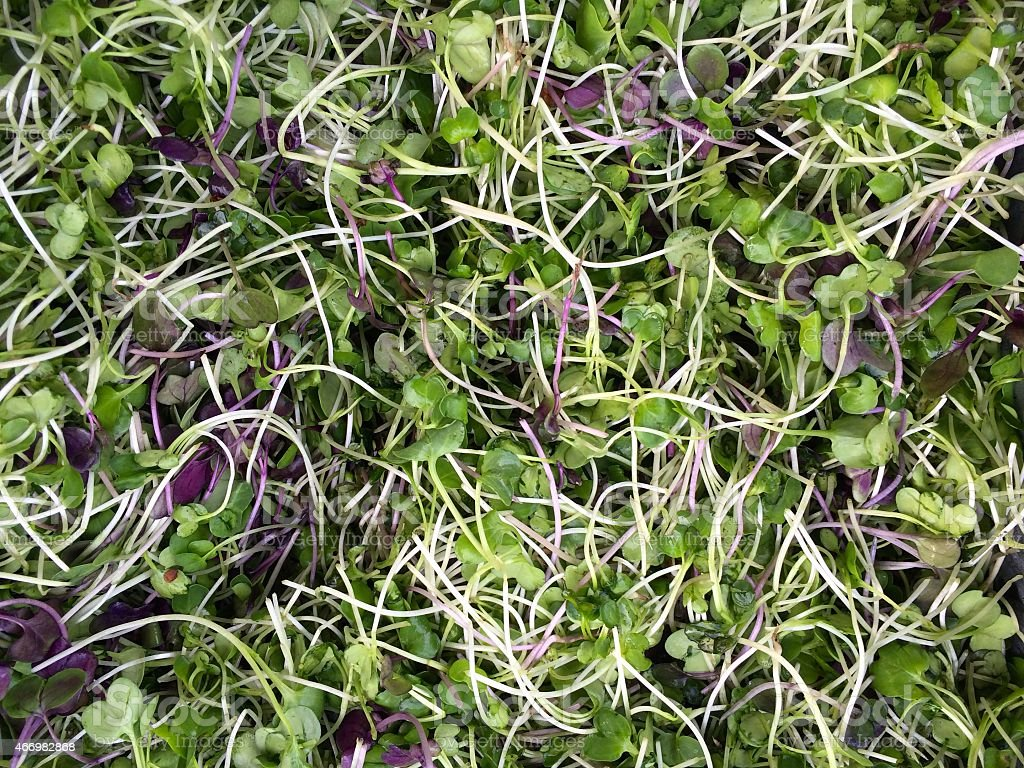 Micro Greens stock photo