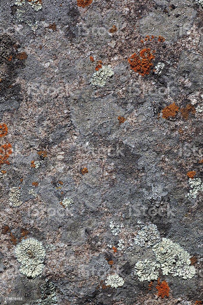 Micro life on a Lava Rock stock photo