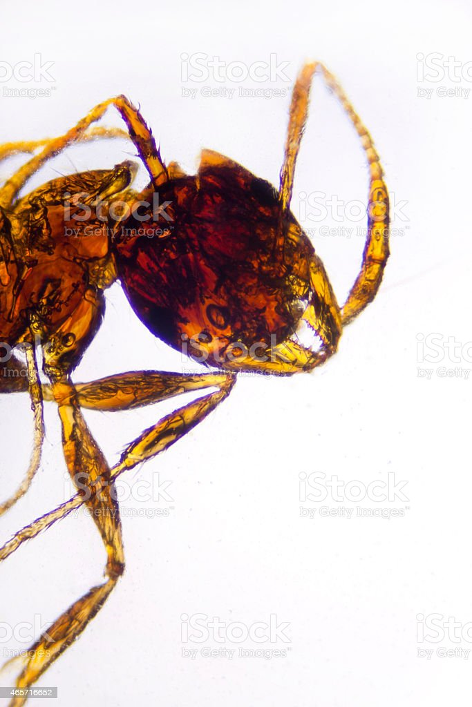 Micro Photo of an Ant stock photo