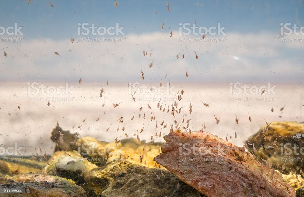 Micro Shrimp in Water royalty-free stock photo
