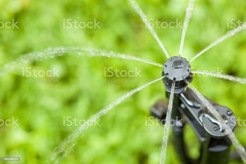 Micro Sprinkler Irrigation Head against Green Roof Background stock photo