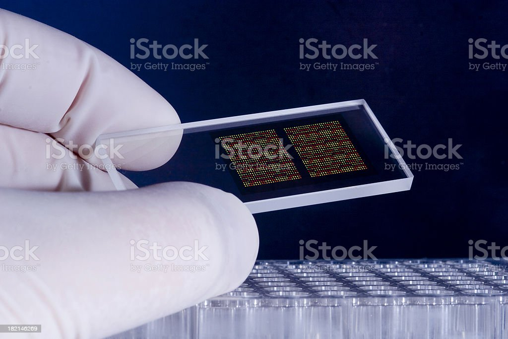 DNA microarray chips stock photo