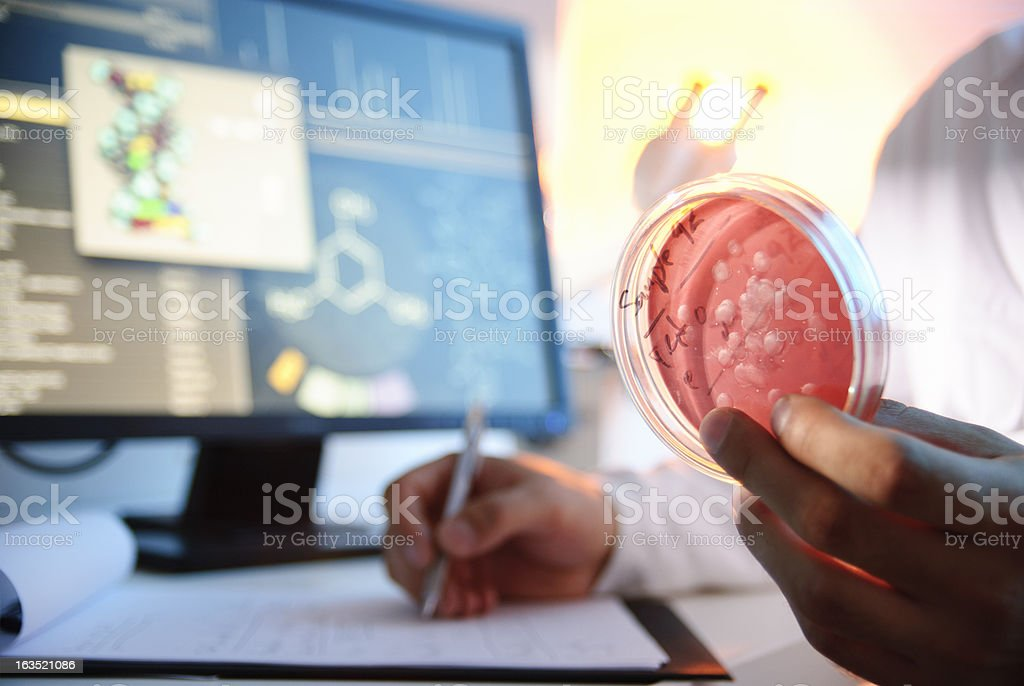 Microbiological Culture royalty-free stock photo