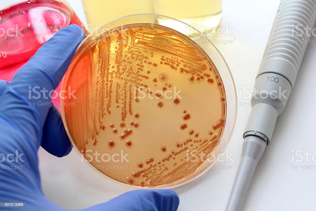 Microbiological examination stock photo