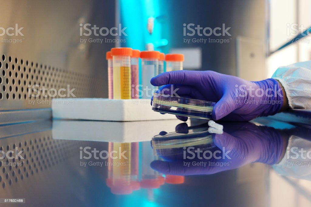 Microbiologist. stock photo