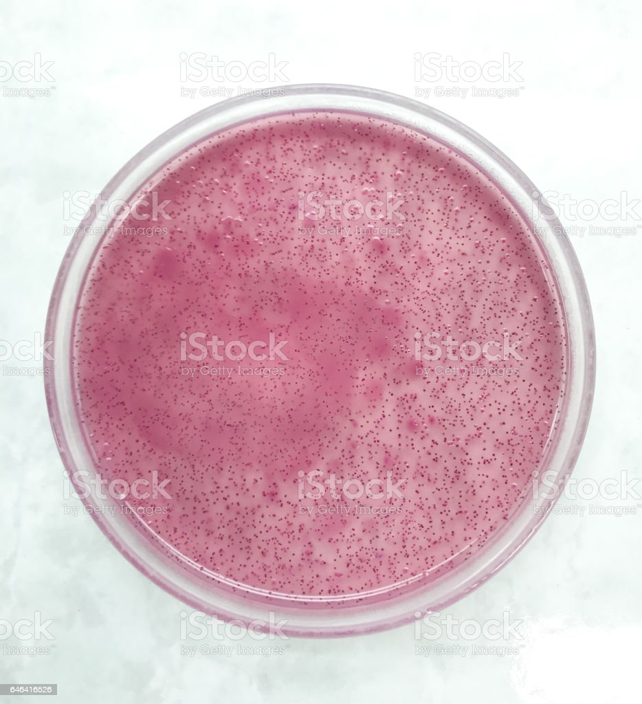 microbiology in laboratory stock photo