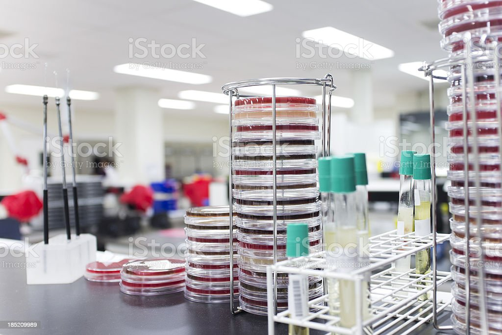 Microbiology Laboratory royalty-free stock photo