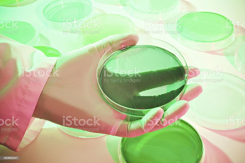 Microbiology, royalty-free stock photo