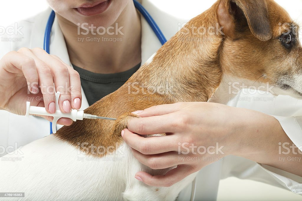 Microchip implant. stock photo