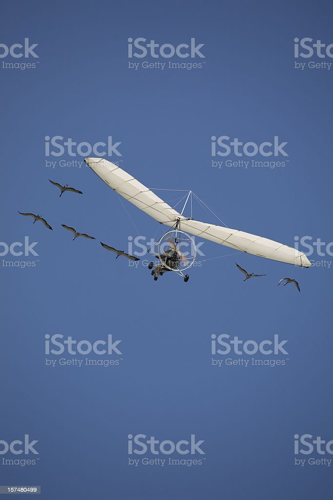 microlight flying  with birds royalty-free stock photo