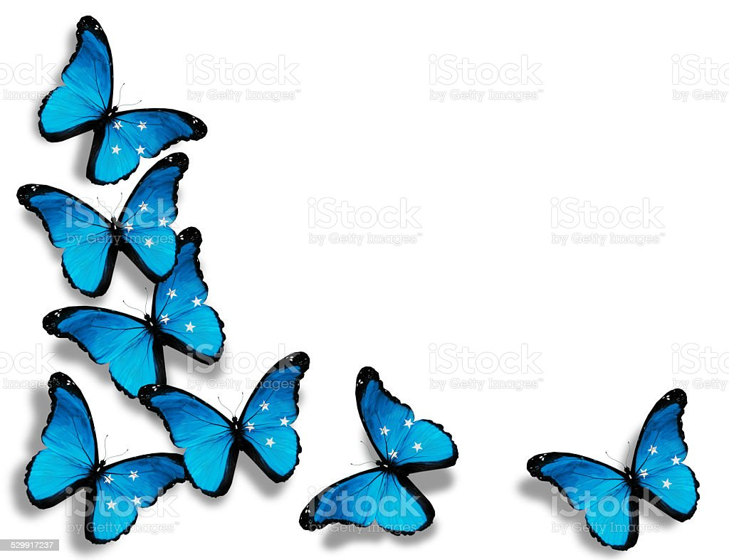 Micronesia flag butterflies, isolated on white background stock photo