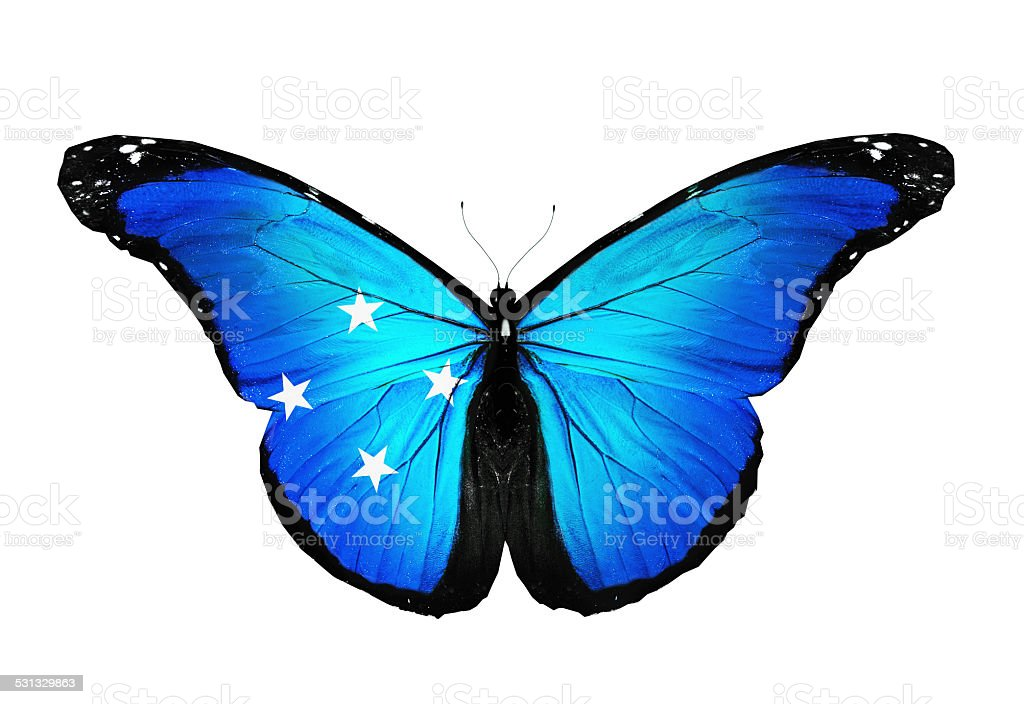 Micronesia flag butterfly, isolated on white background stock photo