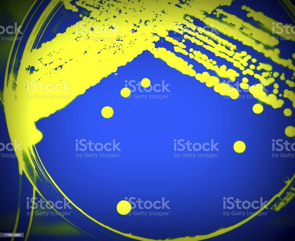 Microorganisms royalty-free stock photo