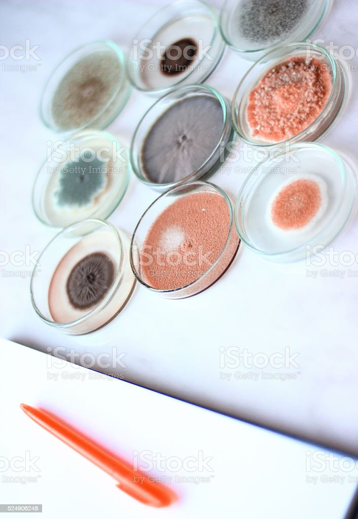 Micro-organisms stock photo