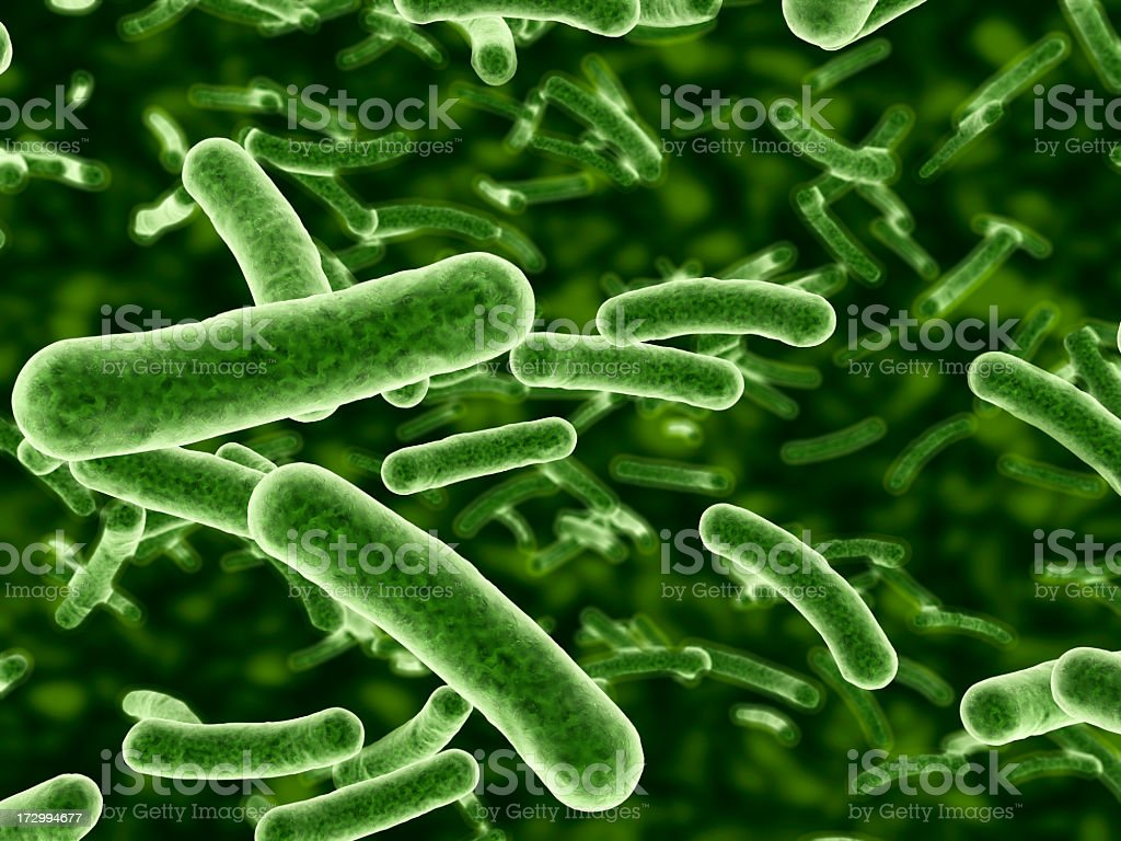 Microscope view of bacteria flowing stock photo