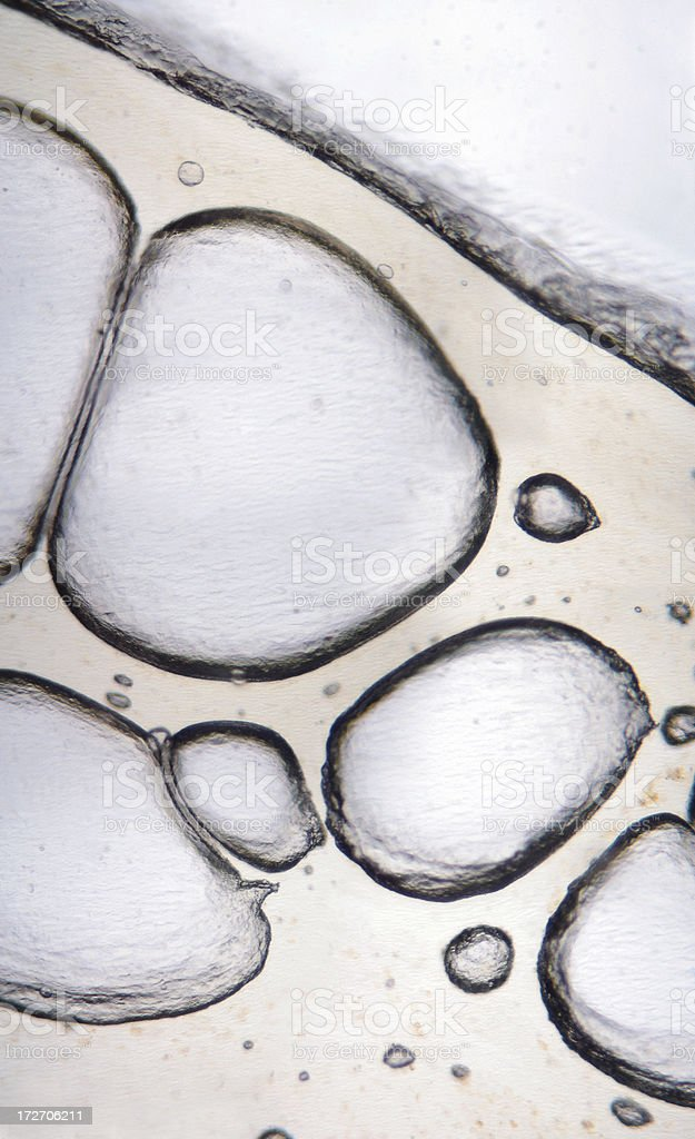 Microscopic Bubbles royalty-free stock photo