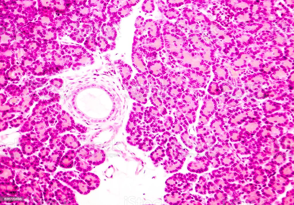 Microscopic photo showing pancreatic tissue stock photo