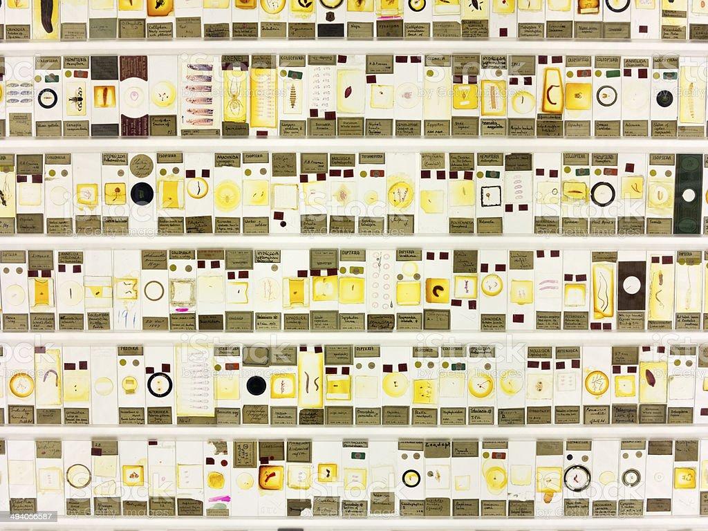 Microscopic Slides stock photo