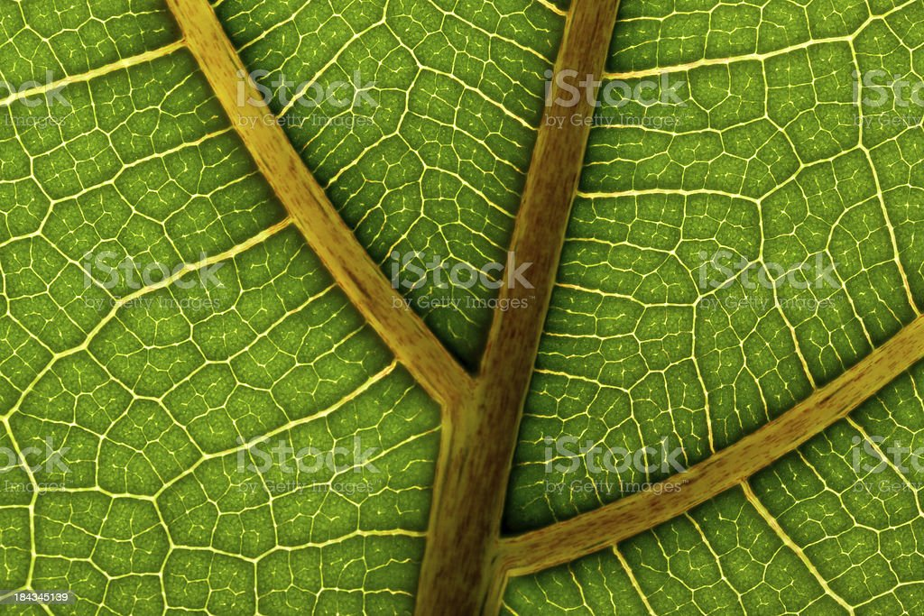 microscopic view of leaf stock photo