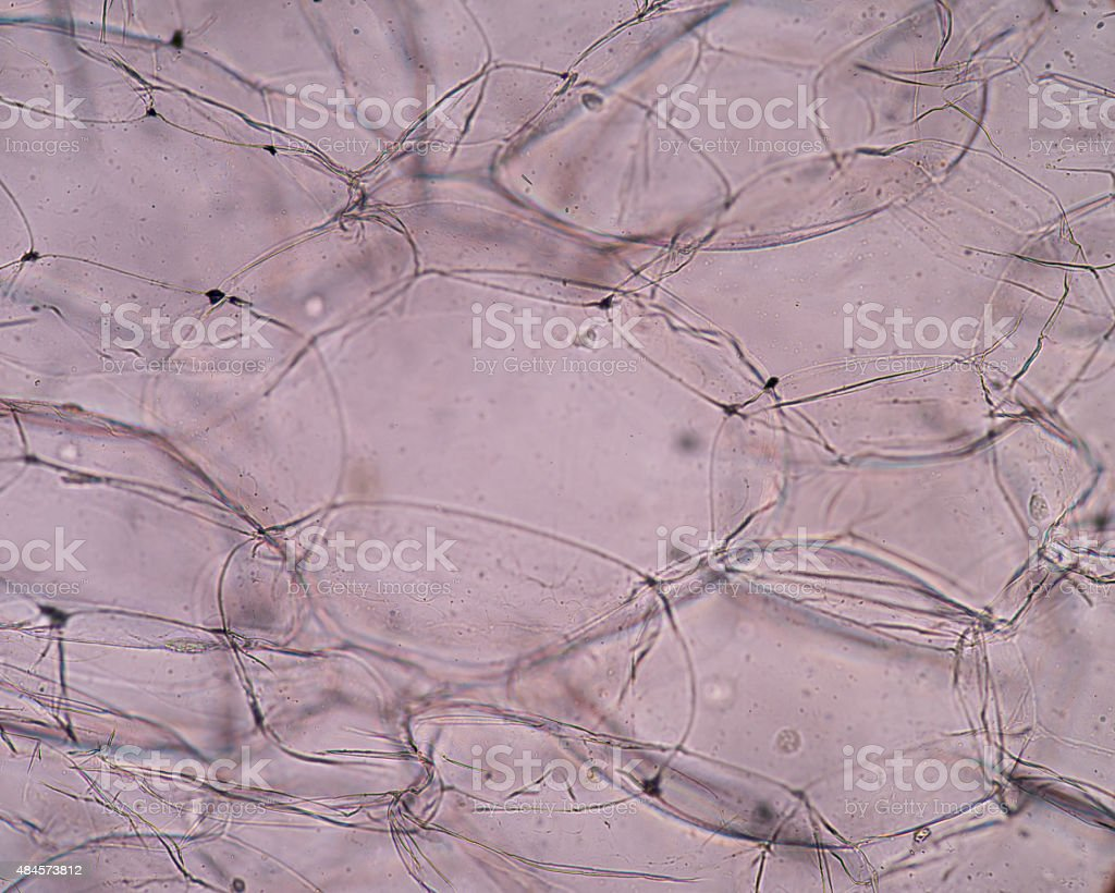 microscopic view of the leaf surface showing plant cells. stock photo