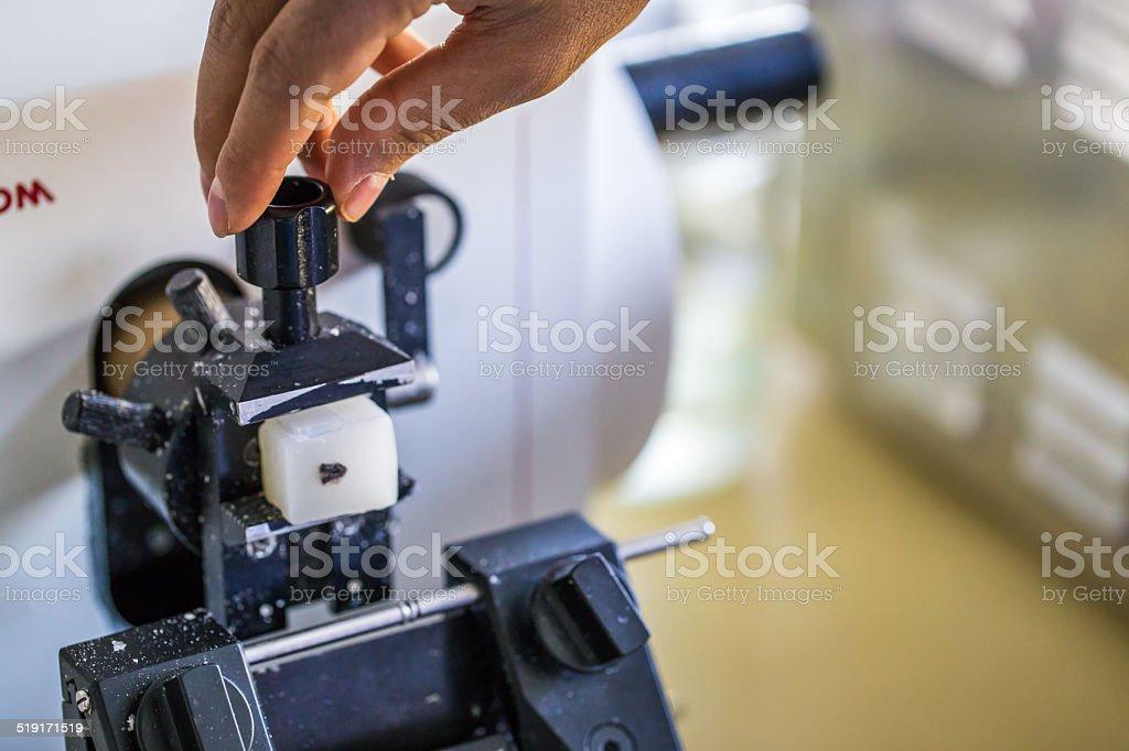 Microtome stock photo
