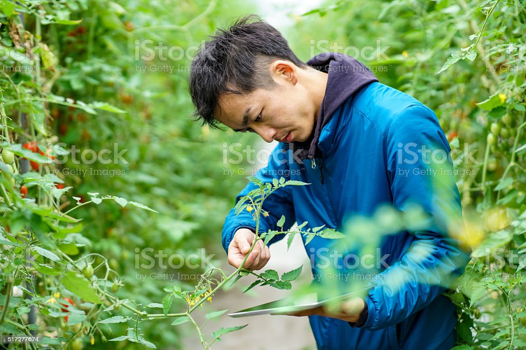 Mid adult man using wireless technology in agriculture stock photo