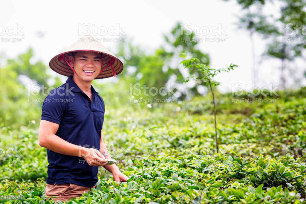 Mid adult Vietnamese man portrait in tea plantation with conical hat stock photo