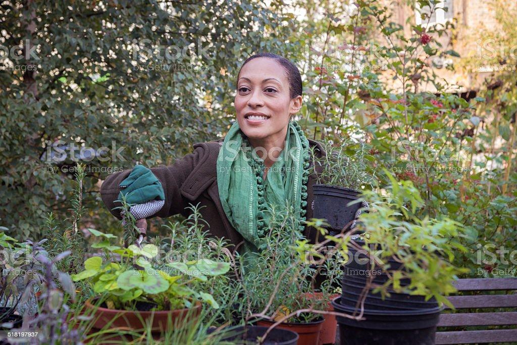 Mid Adult Woman In Urban City Garden Potting Plants, London stock photo