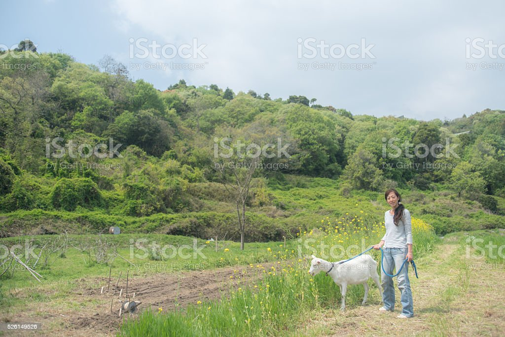 Mid adult woman walking her pet goat at organic farm stock photo