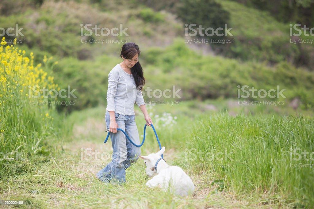 Mid adult woman walking her pet goat at organic farm stock photo