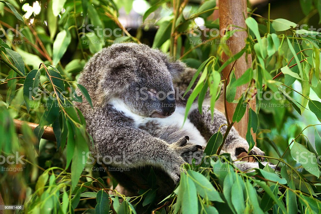 Mid Afternoon Snooze royalty-free stock photo