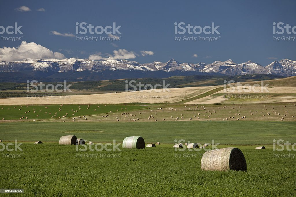 Mid Summer Scenic of Mountains and Alberta Foothills stock photo