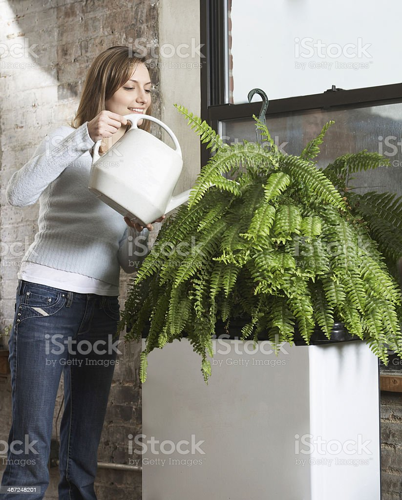 Mid-Adult Woman Watering Houseplant stock photo