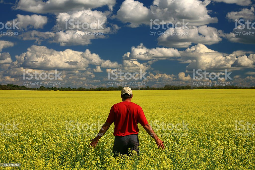 Middle Aged Caucasian Farmer in Yellow Canola Field stock photo