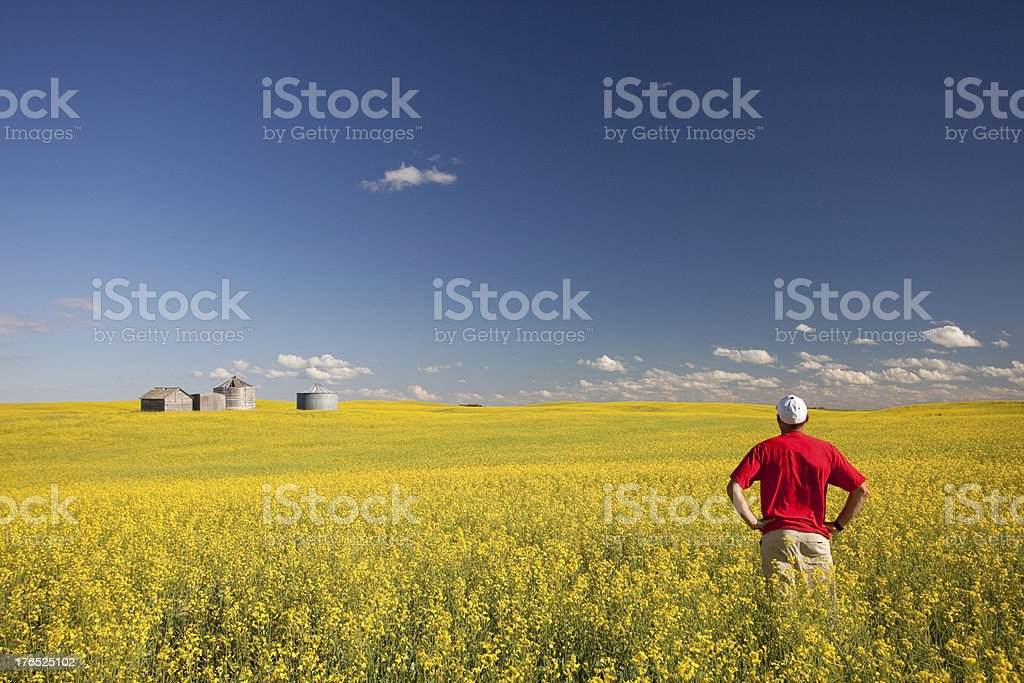Middle Aged Caucasian Farmer Standing in Yellow Canola Field stock photo
