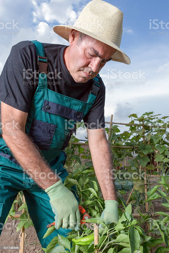 middle aged farmer stock photo