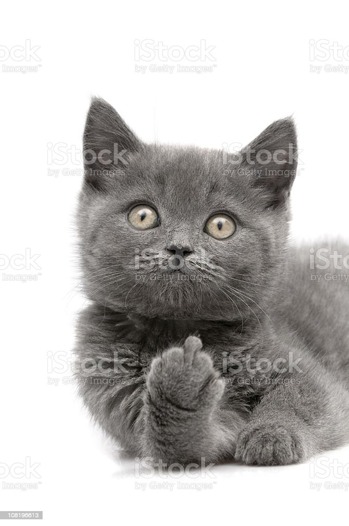 middle finger stock photo