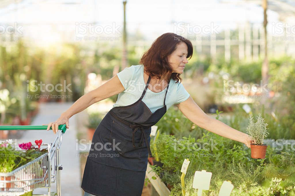Middle sales clerk working at a garden center. stock photo