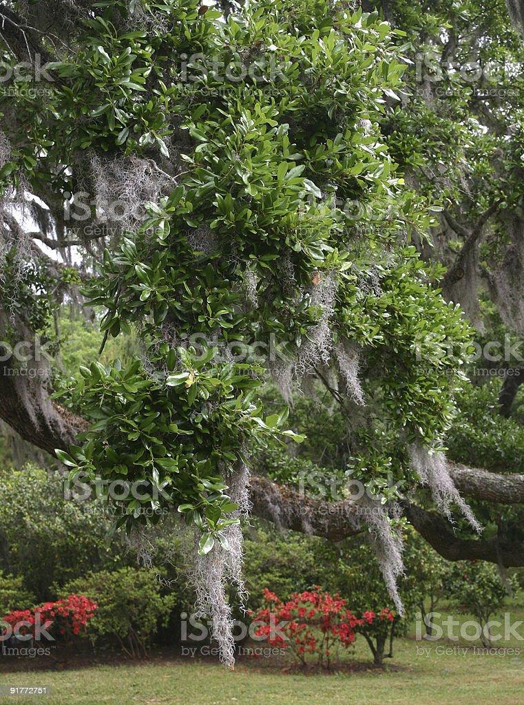 Middleton moss stock photo