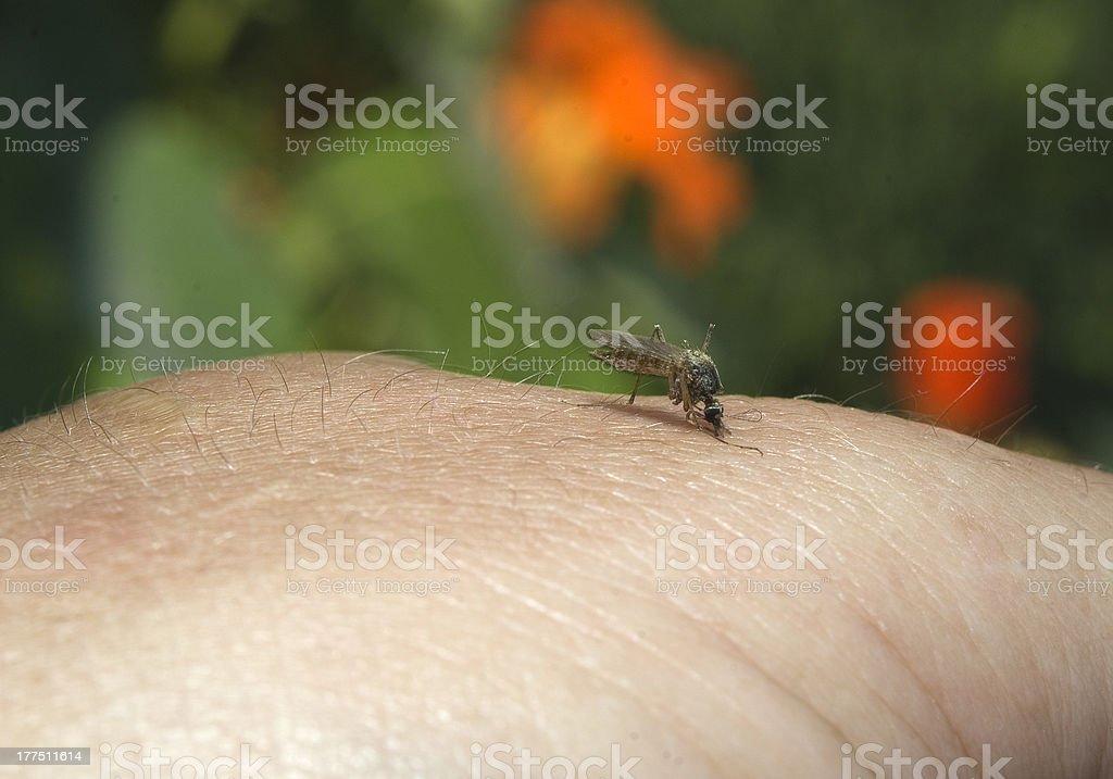 midge on hand of the person stock photo