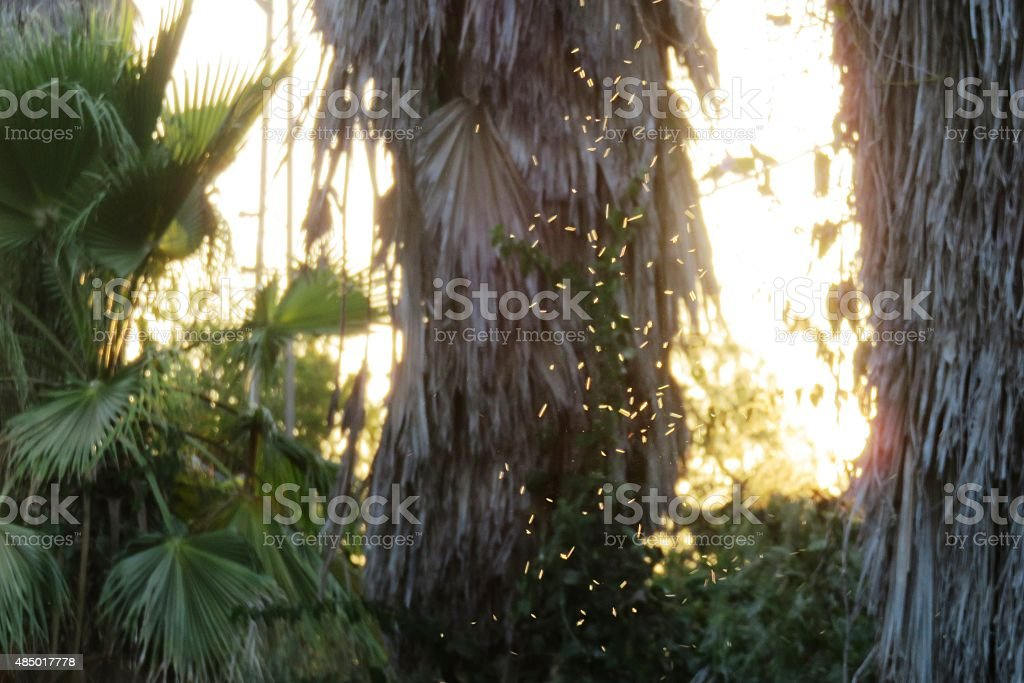 Midges in the sun stock photo