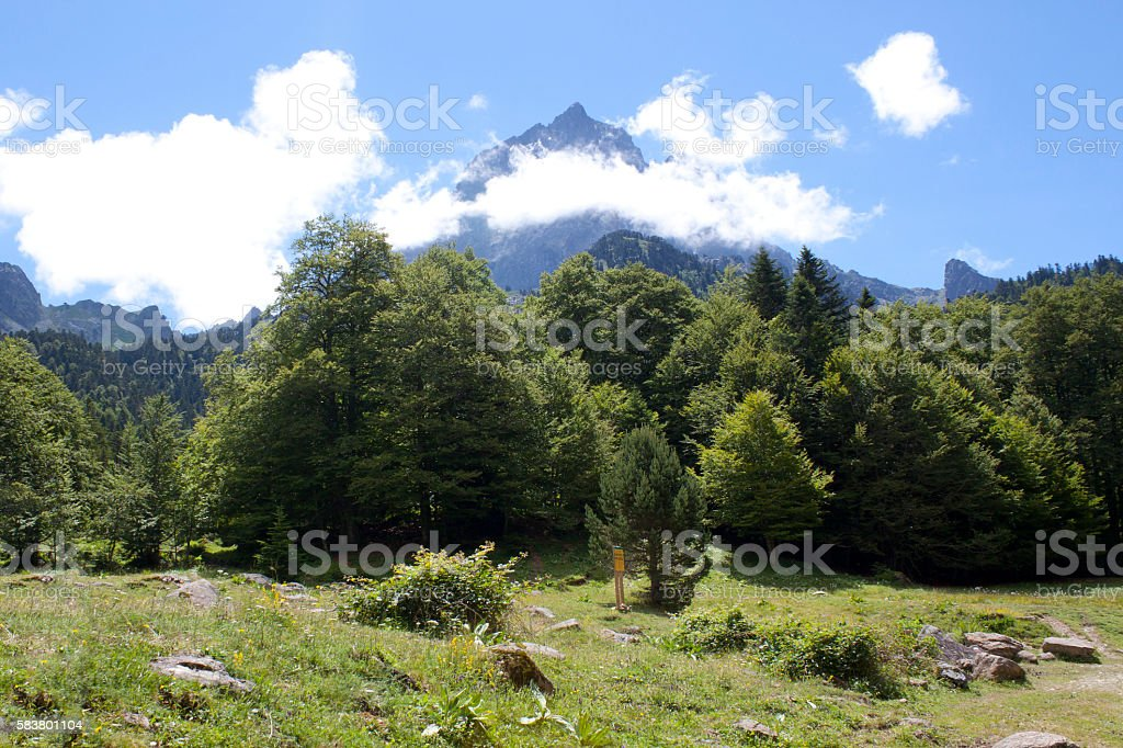 Midi d'Ossau behind pine trees, in Pyrenees, France stock photo