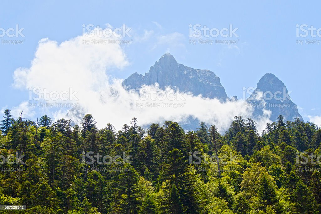 Midi d'Ossau in the morning behind pine trees stock photo